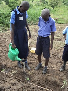 Children watering crops in Uganda