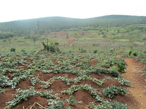 Farm land in Uganda