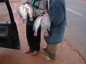 Fish sold on the road-side in Uganda