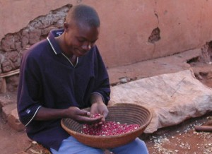 Young man preparing beans